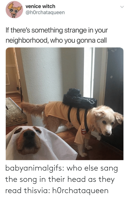 read: babyanimalgifs:  who else sang the song in their head as they read thisvia: h0rchataqueen