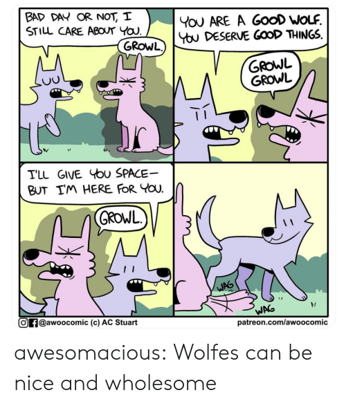 Bad, Bad Day, and Tumblr: BAD DAY OR NOT, I  STILL CARE ABOUT YOU  YoU ARE A GooD WOLF  You DESERVE GOOD THINGS  GROWL)  GROWL  GROWL  TLL GIVE bu SPACE  BUT IM HERE FOR YOU  GROWL  WAG  WAG  @awoocomic (c) AC Stuart  patreon.com/awoocomic awesomacious:  Wolfes can be nice and wholesome