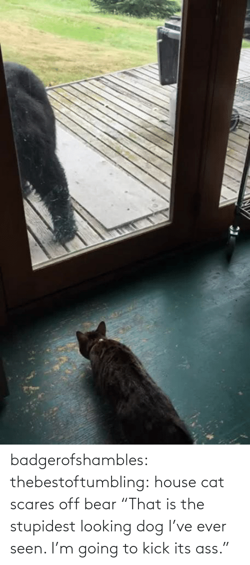 """House: badgerofshambles:  thebestoftumbling:  house cat scares off bear  """"That is the stupidest looking dog I've ever seen. I'm going to kick its ass."""""""