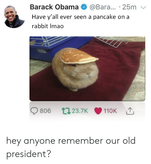 pancake: Barack Obama @Bara... 25m  Have y'all ever seen a pancake on a  rabbit Imao  806 t23.7K 110K hey anyone remember our old president?