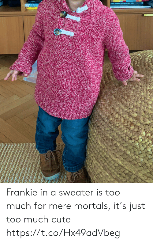 ar: BARESTTO ARE AR ACCEPTABLE LEVEL OF TIEA Frankie in a sweater is too much for mere mortals, it's just too much cute https://t.co/Hx49adVbeg