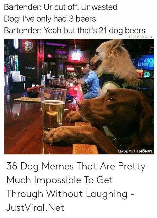 cut off: Bartender: Ur cut off. Ur wasted  Dog: I've only had 3 beers  Bartender: Yeah but that's 21 dog beers  @tank.sinatra  REBEL  PA  EAT  JAG  LIVES HE  MADE WITH MOMUS 38 Dog Memes That Are Pretty Much Impossible To Get Through Without Laughing - JustViral.Net