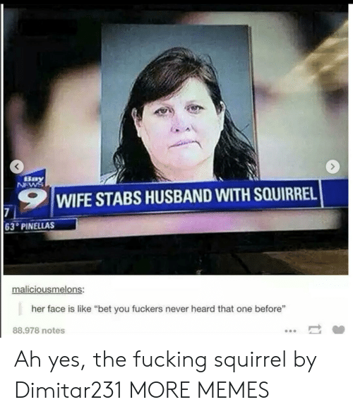 """Fuckers: Bay  NEWS  WIFE STABS HUSBAND WITH SQUIRREL  7  63 PINELLAS  maliciousmelons:  her face is like """"bet you fuckers never heard that one before""""  88.978 notes Ah yes, the fucking squirrel by Dimitar231 MORE MEMES"""