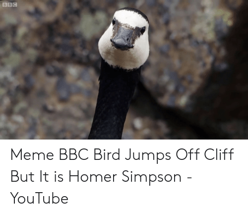 Jumping Off A Cliff Meme: BBC Meme BBC Bird Jumps Off Cliff But It is Homer Simpson - YouTube