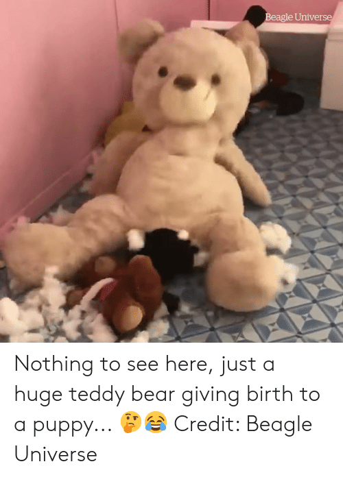 Bear, Puppy, and Universe: Beagle Universe Nothing to see here, just a huge teddy bear giving birth to a puppy... 🤔😂  Credit: Beagle Universe