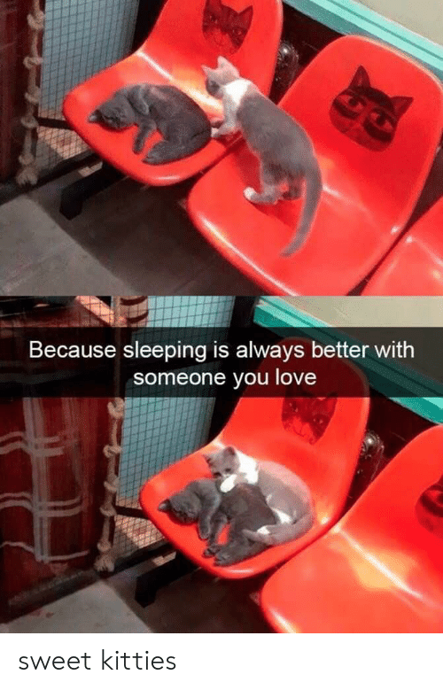 Kitties, Love, and Sleeping: Because sleeping is always better with  someone you love sweet kitties