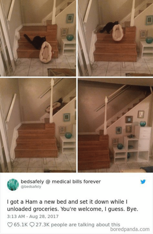 Memes, Forever, and Guess: bedsafely @medical bills forever  @bedsafely  I got a Ham a new bed and set it down while I  unloaded groceries. You're welcome, I guess. Bye.  3:13 AM Aug 28, 2017  65.1K 27.3K people are talking about this  boredpanda.com