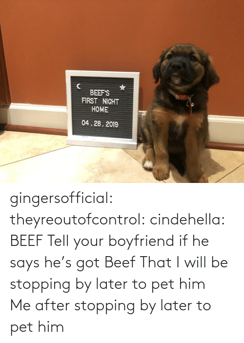 Boyfriend: BEEF'S  FIRST NIGHT  HOME  04.28.2019 gingersofficial:  theyreoutofcontrol:  cindehella: BEEF Tell your boyfriend if he says he's got Beef That I will be stopping by later to pet him    Me after stopping by later to pet him