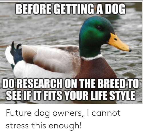 Future, Life, and Advice Animals: BEFORE GETTING A DOG  DO RESEARCH ON THE BREED TO  SEE IF IT FITS YOUR LIFE STYLE Future dog owners, I cannot stress this enough!