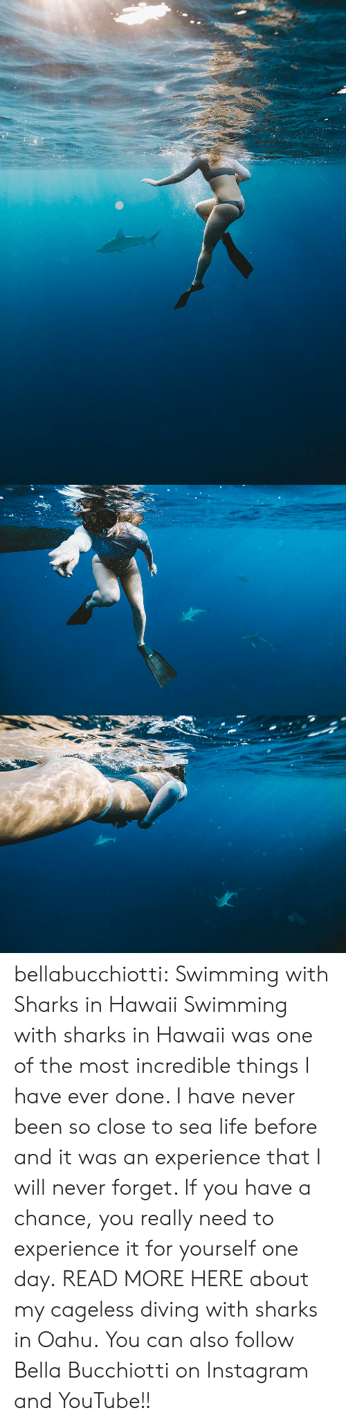 Instagram, Life, and Tumblr: bellabucchiotti: Swimming with Sharks in Hawaii   Swimming with sharks in Hawaii was one of the most incredible things I  have ever done. I have never been so close to sea life before and it was  an experience that I will never forget. If you have a chance, you  really need to experience it for yourself one day.  READ MORE HERE about my cageless diving with sharks in Oahu.  You can also follow Bella Bucchiotti on Instagram and YouTube!!