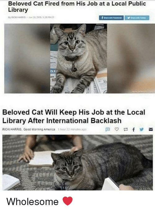 Good Morning, Good, and Library: Beloved Cat Fired from His Job at a Local Public  Library  Beloved Cat Will Keep His Job at the Local  Library After International Backlash  RICKS HARRIS, Good Morning Amenca 1  22u Wholesome ❤️