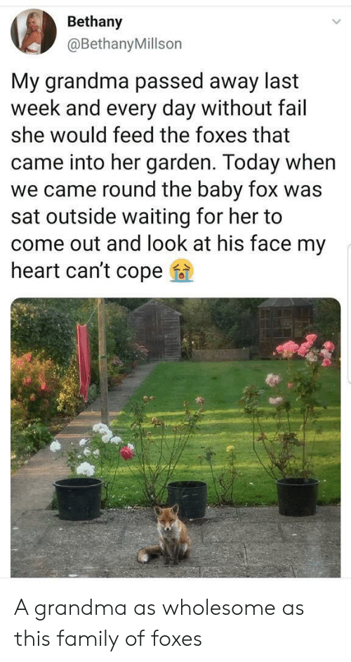 cope: Bethany  @BethanyMillson  My grandma passed away last  week and every day without fail  she would feed the foxes that  came into her garden. Today when  we came round the baby fox was  sat outside waiting for her to  come out and look at his face my  heart can't cope A grandma as wholesome as this family of foxes