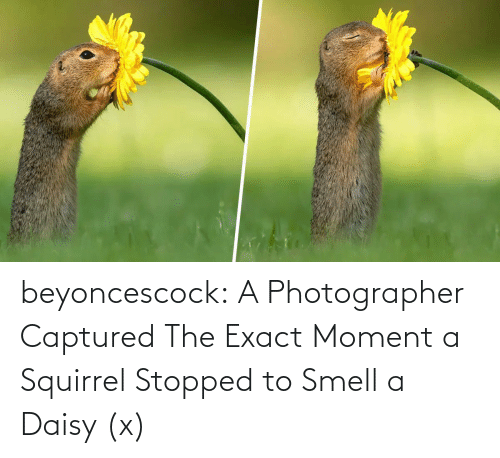 Smell: beyoncescock:   A Photographer Captured The Exact Moment a Squirrel Stopped to Smell a Daisy (x)