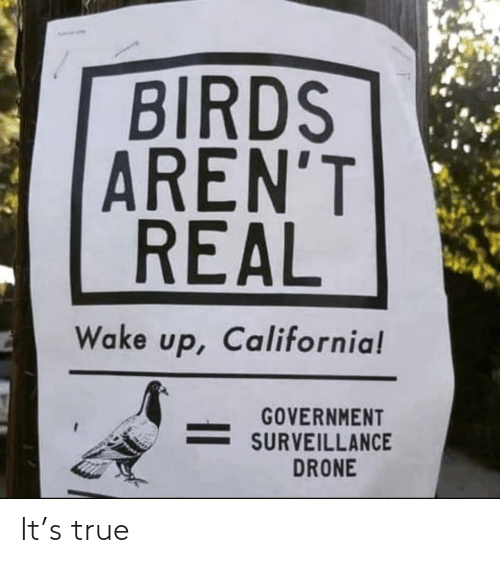 wake up: BIRDS  AREN'T  REAL  Wake up, California!  GOVERNMENT  SURVEILLANCE  DRONE It's true