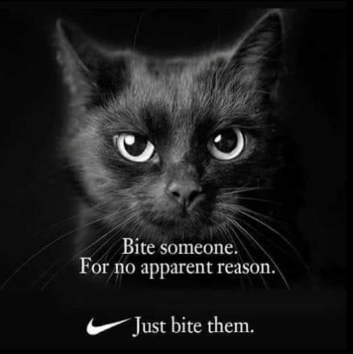 apparent: Bite someone.  or no apparent reason  Just bite them.