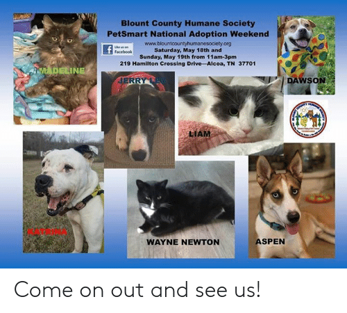 Facebook, Memes, and Aspen: Blount County Humane Society  PetSmart National Adoption Weekend  www.blountcountyhumanesociety.org  Saturday, May 18th and  Sunday, May 19th from 11am-3pmm  219 Hamilton Crossing Drive -Alcoa, TN 37701  Facebook  DAWSON  LIAM  KATRINA  ASPEN  WAYNE NEWTON Come on out and see us!
