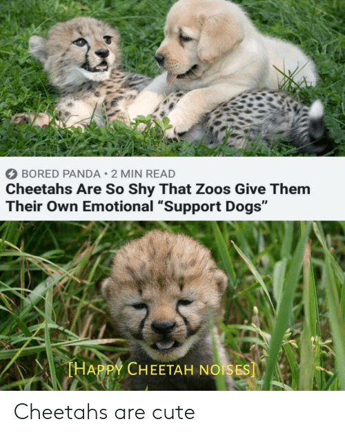 """Bored Panda: BORED PANDA 2 MIN READ  Cheetahs Are So Shy That Zoos Give Them  Their Own Emotional """"Support Dogs""""  THAPPY CHEETAH NOISES] Cheetahs are cute"""