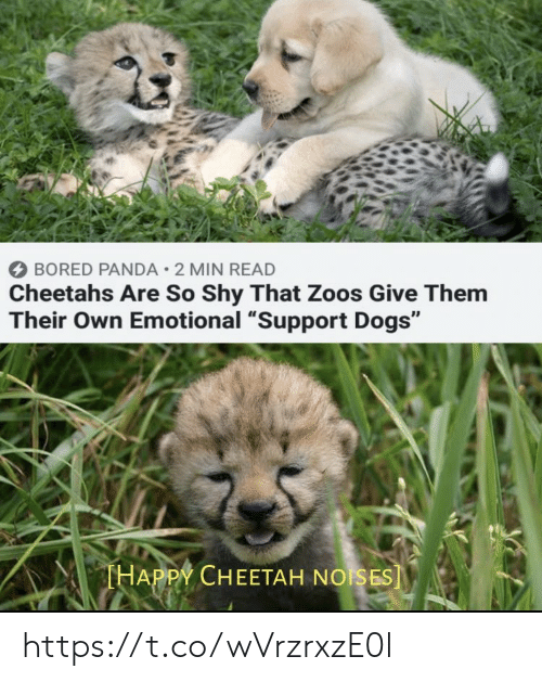 """Bored Panda: BORED PANDA 2 MIN READ  Cheetahs Are So Shy That Zoos Give Them  Their Own Emotional """"Support Dogs""""  THAPPY CHEETAH NOISES] https://t.co/wVrzrxzE0l"""