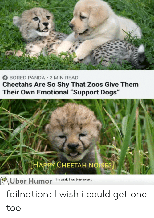 """Bored Panda: BORED PANDA 2 MIN READ  Cheetahs Are So Shy That Zoos Give Them  Their Own Emotional """"Support Dogs""""  THAPPY CHEETAH NOISES  Uber Humor  I'm afraid I just blue myself. failnation:  I wish i could get one too"""