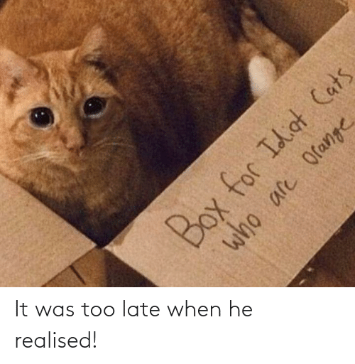 Idiot: Box for Idiot Cats  who are Orange It was too late when he realised!