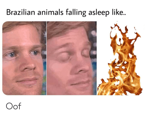 Animals, Brazilian, and Like: Brazilian animals falling asleep like.. Oof