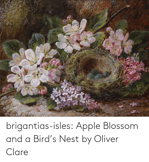 bird: brigantias-isles:    Apple Blossom and a Bird's Nest   by Oliver Clare