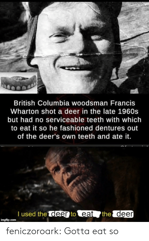 Deer, Tumblr, and Blog: British Columbia woodsman Francis  Wharton shot a deer in the late 1960s  but had no serviceable teeth with which  to eat it so he fashioned dentures out  of the deer's own teeth and ate it.  T used the deer to eat  the deer  imgflip.com feniczoroark:  Gotta eat so