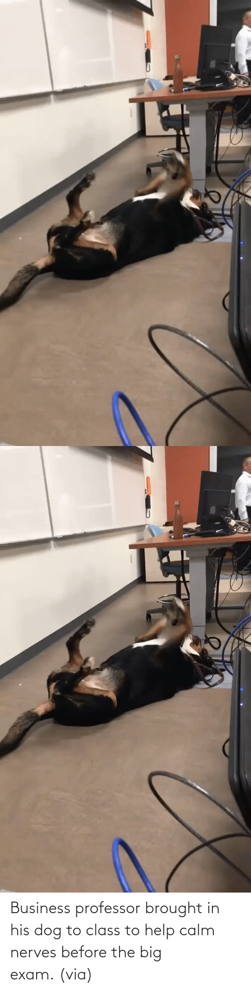 Help: Business professor brought in his dog to class to help calm nerves before the big exam. (via)