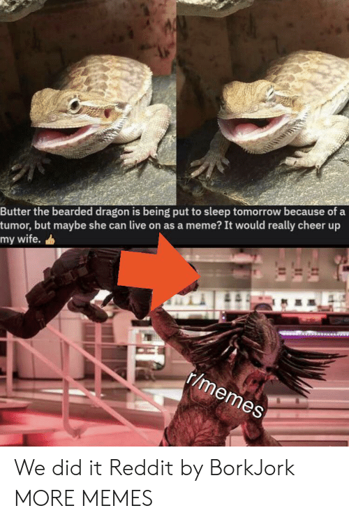 Meme It: Butter the bearded dragon is being put to sleep tomorrow because of a  tumor, but maybe she can live on as a meme? It would really cheer up  my wife.  r/memes We did it Reddit by BorkJork MORE MEMES