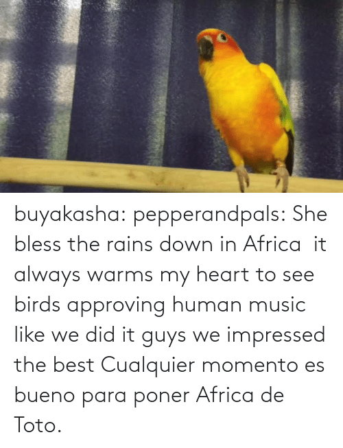 para: buyakasha:  pepperandpals: She bless the rains down in Africa  it always warms my heart to see birds approving human music like we did it guys we impressed the best  Cualquier momento es bueno para poner Africa de Toto.