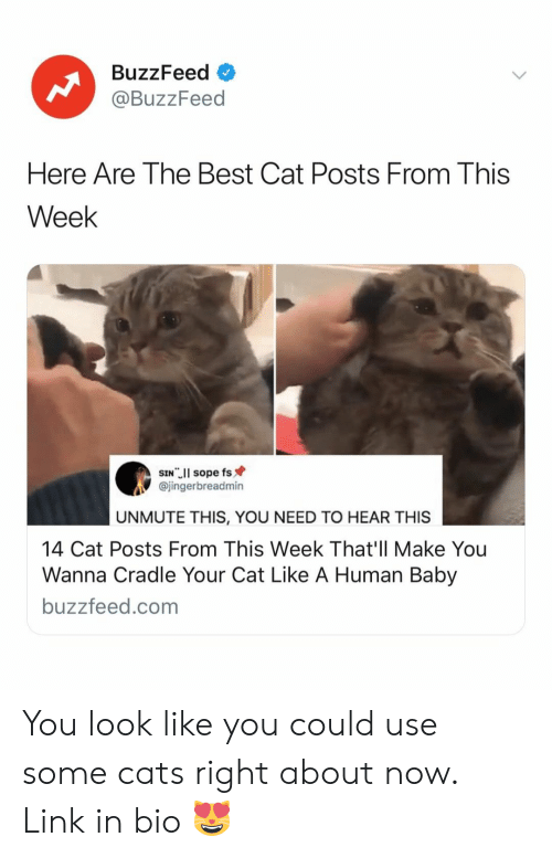 Cats, Best, and Buzzfeed: BuzzFeed  @BuzzFeed  Here Are The Best Cat Posts From This  Week  @jingerbreadmin  UNMUTE THIS, YOU NEED TO HEAR THIS  14 Cat Posts From This Week That'll Make You  Wanna Cradle Your Cat Like A Human Baby  buzzfeed.com You look like you could use some cats right about now. Link in bio 😻