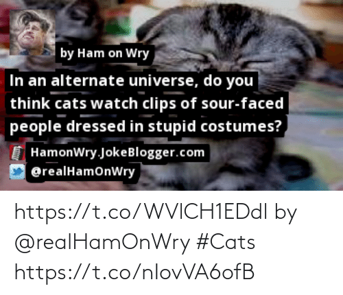 Faced People: by Ham on Wry  In an alternate universe, do you  think cats watch clips of sour-faced  people dressed in stupid costumes?  HamonWry.JokeBlogger.com  @realHamonWry https://t.co/WVlCH1EDdl by @realHamOnWry #Cats https://t.co/nIovVA6ofB