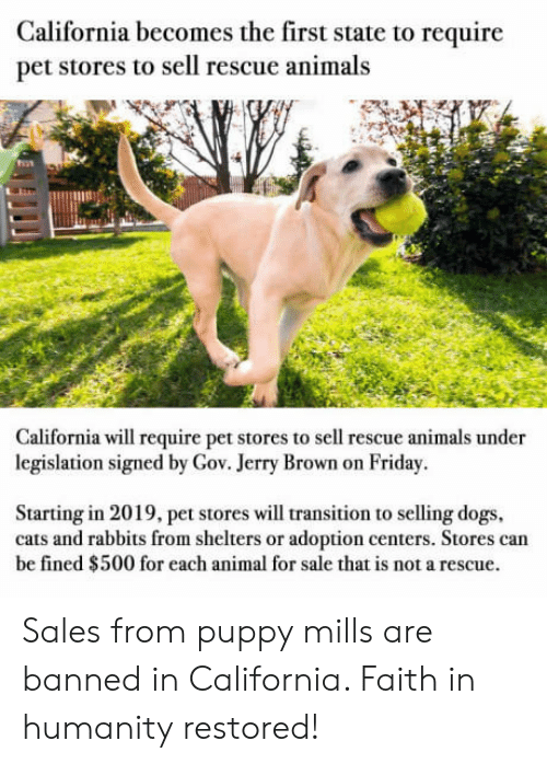 Humanity Restored: California becomes the first state to require  pet stores to sell rescue animals  133  California will require pet stores to sell rescue animals under  legislation signed by Gov. Jerry Brown on Friday.  Starting in 2019, pet stores will transition to selling dogs  cats and rabbits from shelters or adoption centers. Stores can  be fined $500 for each animal for sale that is not a rescue. Sales from puppy mills are banned in California. Faith in humanity restored!