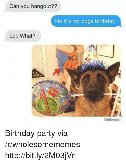 Birthday, Dogs, and Lol: Can you hangout??  No it's my dogs birthday  Lol. What?  Delivered Birthday party via /r/wholesomememes http://bit.ly/2M03jVr