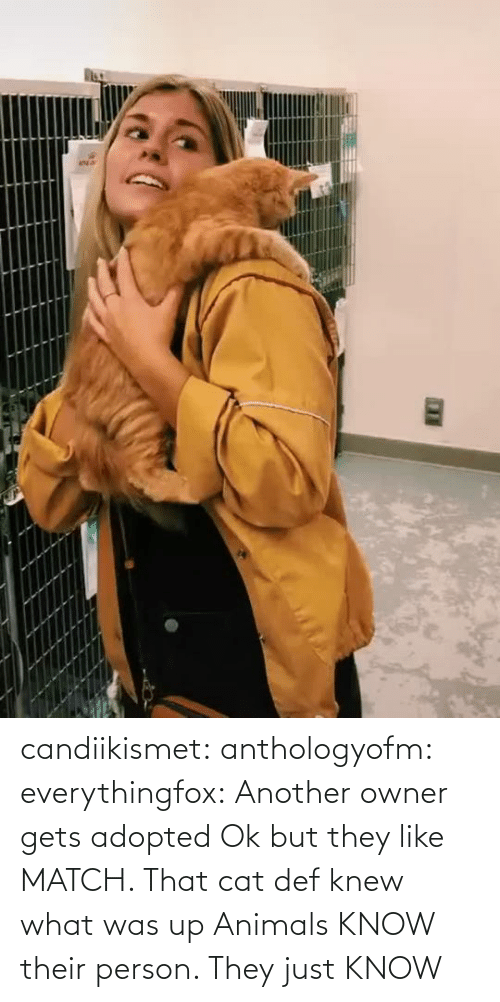 def: candiikismet:  anthologyofm:  everythingfox:   Another owner gets adopted  Ok but they like MATCH. That cat def knew what was up   Animals KNOW their person. They just KNOW