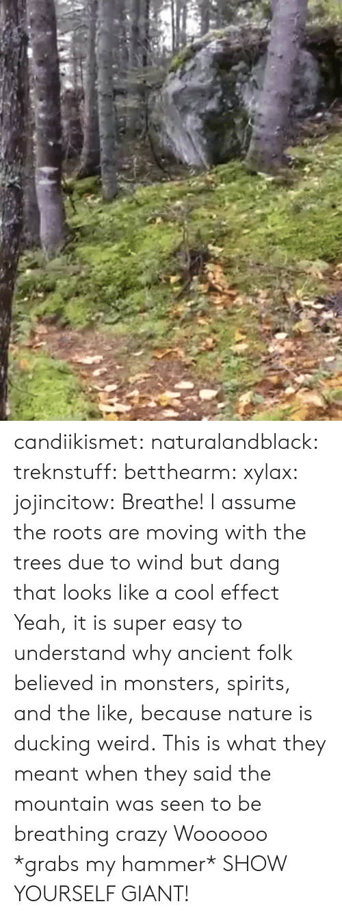 Crazy, Tumblr, and Weird: candiikismet: naturalandblack:   treknstuff:  betthearm:  xylax:  jojincitow: Breathe! I assume the roots are moving with the trees due to wind but dang that looks like a cool effect   Yeah, it is super easy to understand why ancient folk believed in monsters, spirits, and the like, because nature is ducking weird.  This is what they meant when they said the mountain was seen to be breathing  crazy   Woooooo   *grabs my hammer* SHOW YOURSELF GIANT!