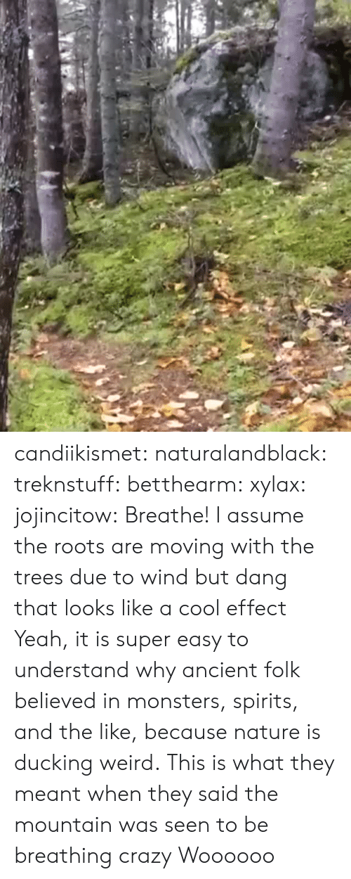 the mountain: candiikismet: naturalandblack:   treknstuff:  betthearm:  xylax:  jojincitow: Breathe! I assume the roots are moving with the trees due to wind but dang that looks like a cool effect   Yeah, it is super easy to understand why ancient folk believed in monsters, spirits, and the like, because nature is ducking weird.  This is what they meant when they said the mountain was seen to be breathing  crazy   Woooooo
