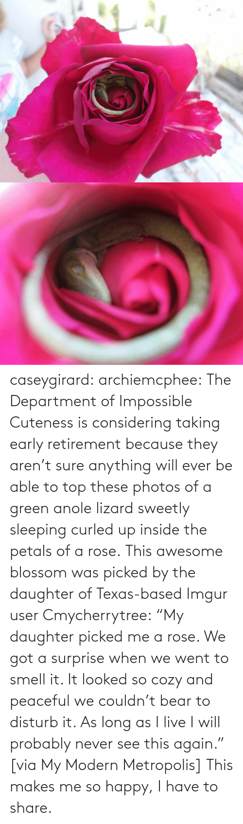 "Able: caseygirard:  archiemcphee:   The Department of Impossible Cuteness is considering taking early retirement because they aren't sure anything will ever be able to top these photos of a green anole lizard sweetly sleeping curled up inside the petals of a rose. This awesome blossom was picked by the daughter of Texas-based Imgur user Cmycherrytree: ""My daughter picked me a rose. We got a surprise when we went to smell it. It looked so cozy and peaceful we couldn't bear to disturb it. As long as I live I will probably never see this again."" [via My Modern Metropolis]   This makes me so happy, I have to share."