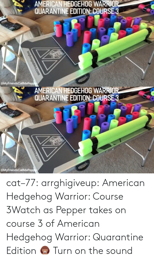 American: cat–77:  arrghigiveup:   American Hedgehog Warrior: Course 3Watch as Pepper takes on course 3 of American Hedgehog Warrior: Quarantine Edition 🦔     Turn on the sound
