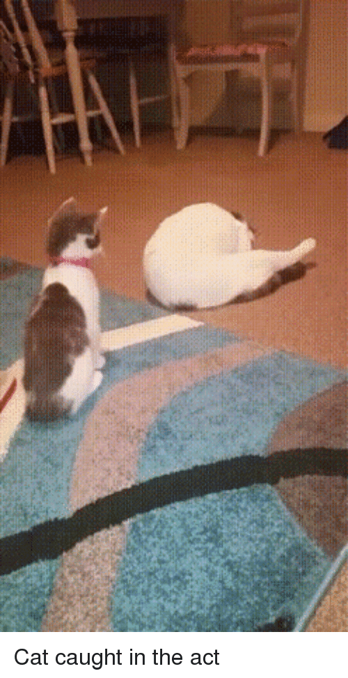 Cat acting crazy all of a sudden