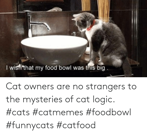 Logic: Cat owners are no strangers to the mysteries of cat logic. #cats #catmemes #foodbowl #funnycats #catfood