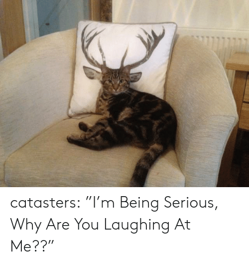 "why are you laughing: catasters:  ""I'm Being Serious, Why Are You Laughing At Me??"""
