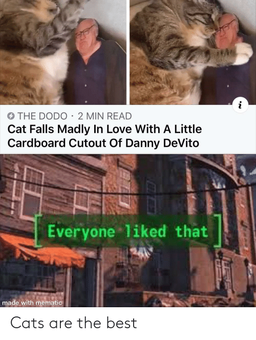 Are: Cats are the best