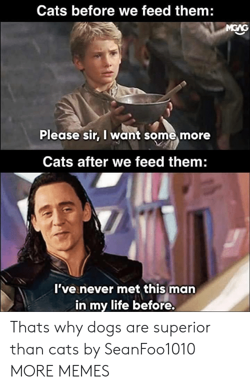 Cats, Dank, and Dogs: Cats before we feed them:  Please sir, I want some more  Cats after we feed them  I've never met this man  in my life before. Thats why dogs are superior than cats by SeanFoo1010 MORE MEMES
