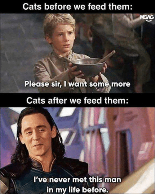 Cats, Life, and Memes: Cats before we feed them:  Please sir, I want some more  Cats after we feed them:  I've never met this man  in my life before.