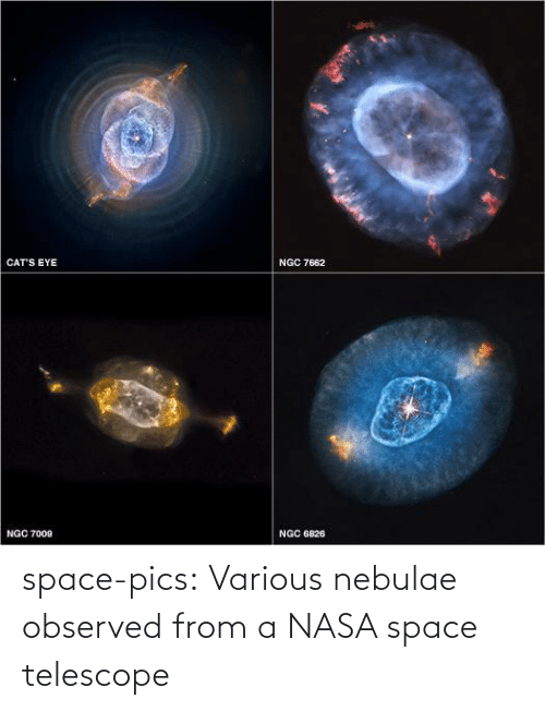 Cats, Nasa, and Tumblr: CAT'S EYE  NGC 7662  NGC 7009  NGC 6826 space-pics:  Various nebulae observed from a NASA space telescope