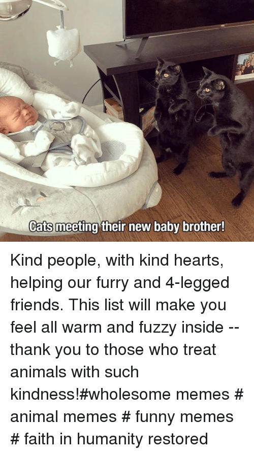 Humanity Restored: Cats meeting their new baby brother! Kind people, with kind hearts, helping our furry and 4-legged friends. This list will make you feel all warm and fuzzy inside -- thank you to those who treat animals with such kindness!#wholesome memes # animal memes # funny memes # faith in humanity restored