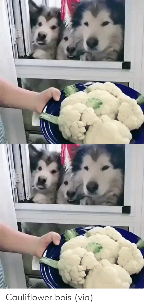 Keep: Cauliflower bois (via)