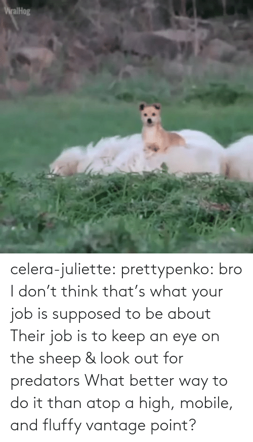 point: celera-juliette:  prettypenko: bro I don't think that's what your job is supposed to be about    Their job is to keep an eye on the sheep & look out for predators What better way to do it than atop a high, mobile, and fluffy vantage point?