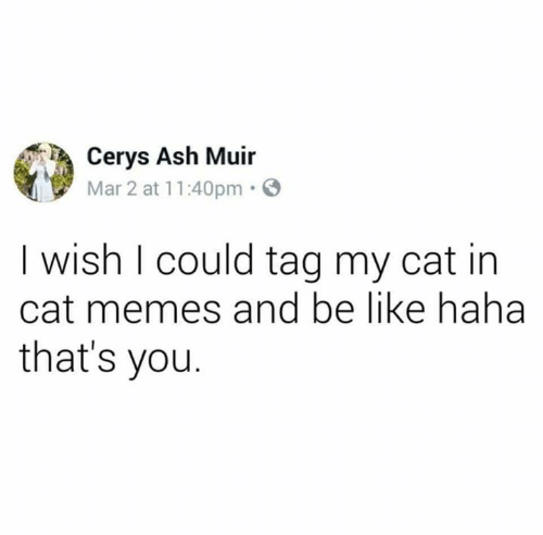 Ash, Be Like, and Memes: Cerys Ash Muir  Mar 2 at 11:40pm  I wish I could tag my cat in  cat memes and be like haha  that's you.